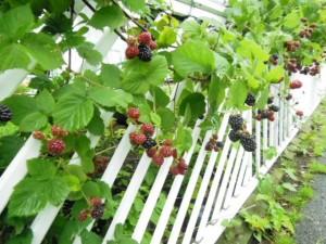 2014.7.11blackberry1