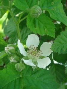 5.08raspberry